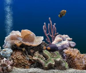 beste aquarium filter beoordeling