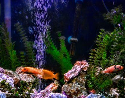 buitenfilter aquarium