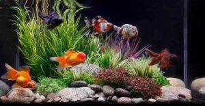 ondergronds grindfilters voor aquariums
