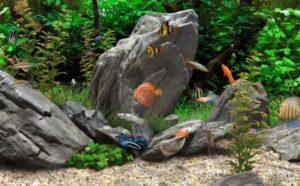 beste aquarium